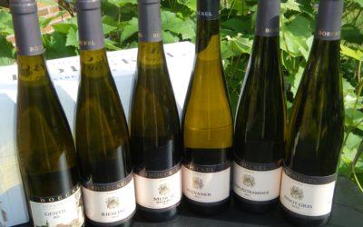 Smagekasse Alsace Vine